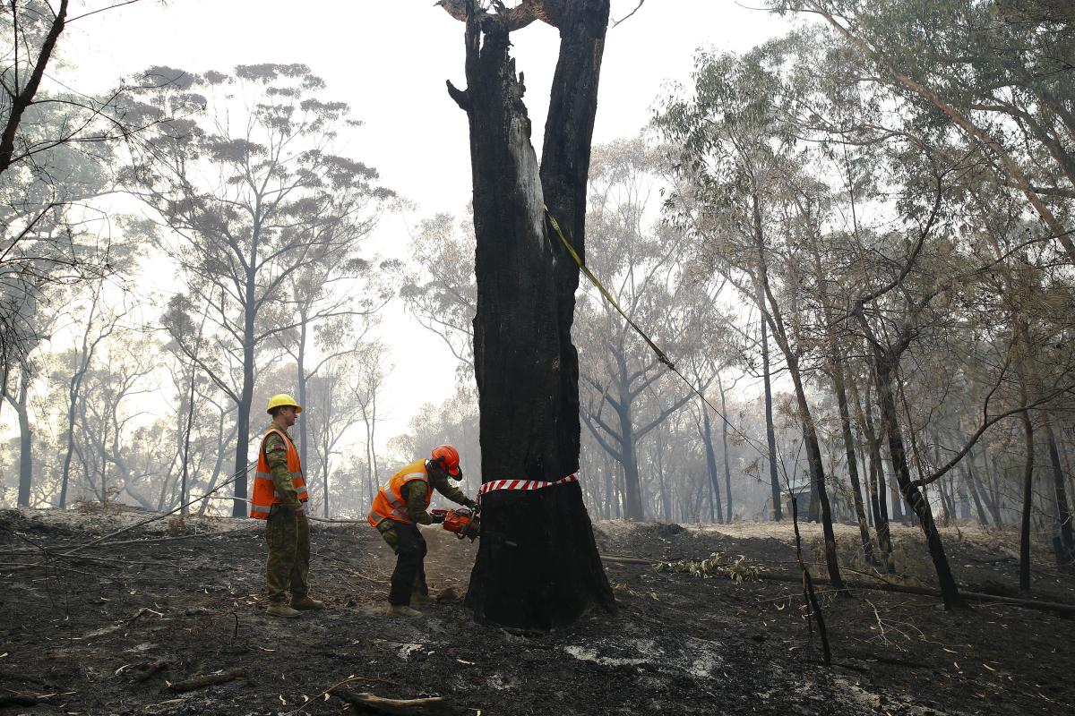 Sapper James Denton and Lance Corporal Stephen Baylis, of 5th Engineer Regiment, prepare to fall a burnt-out tree threatening a road near Wonboyn Lake. Photo: Max Bree