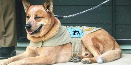 Mascot of the 3rd Combat Service Support Battalion Corporal Toby Tebiass. Photo: Sergeant Gayle Walkom